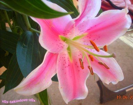 .-**-.__.-**-.  Une fleur est un être entièrement poétique    .-**-.__.-**-.