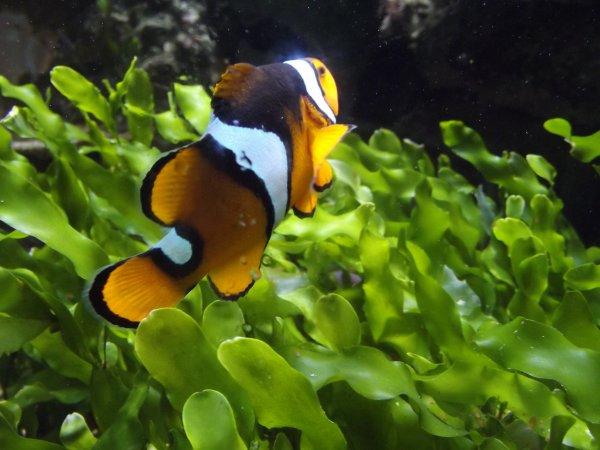 Aquarium!!!