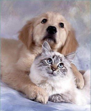 Chien et chat trop mignon animauxtropminion - Photo de chien et chat mignon ...