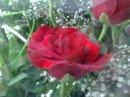 Photo de dris3ahd