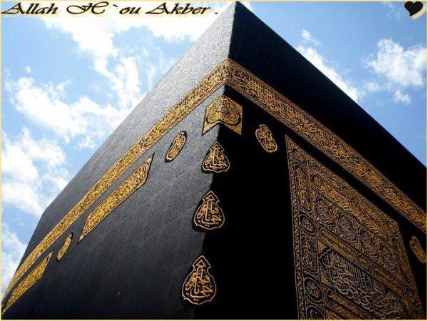 Je ne veux pas profiter de la vie. Je suis ici pour montré ma foi en Allah (swt) .