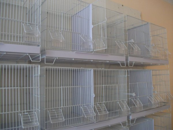 Mes cages d'élevage pour la saison 2014