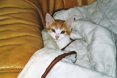 Les disparus - Kitten