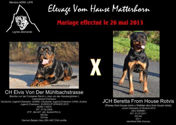 Mariage effectué le 26 mai 2013 entre Beretta from house rotvis et Elvis von der Mühlbachstrasse (ADRK)