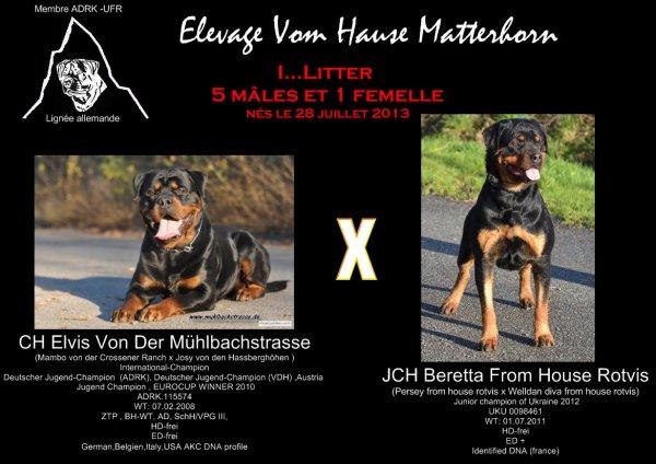 Chiots nés le 28/07/2013 entre Beretta from house rotvis et Elvis von der Mühlbachstrasse (ADRK)