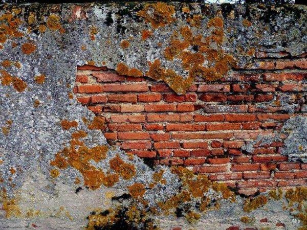Muros***Murs