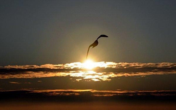 Como uma gaivota***Comme la mouette