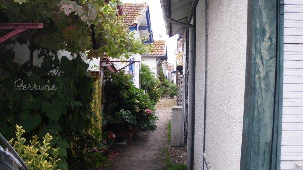 Village de l'Herbe, Cap Ferret.-  Série de photos.