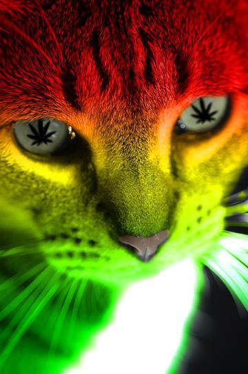 le chat du bonheurs