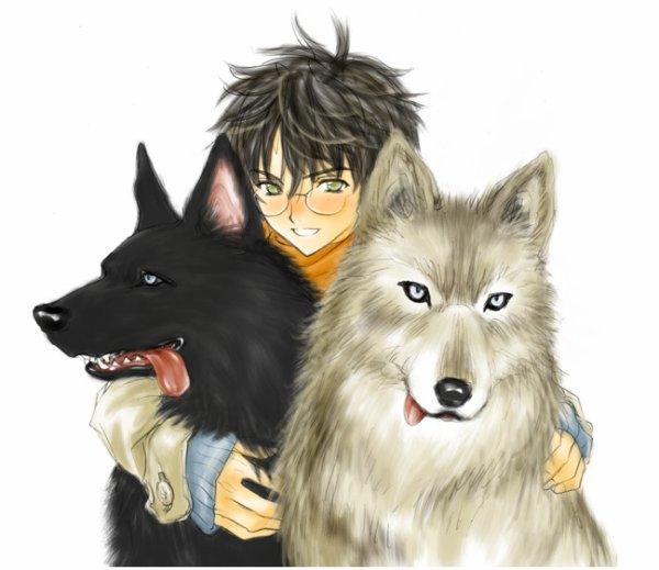 Harry, Rémus, Sirius.