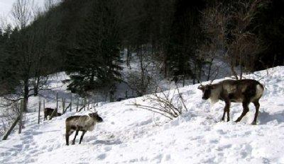 La Laponie en France