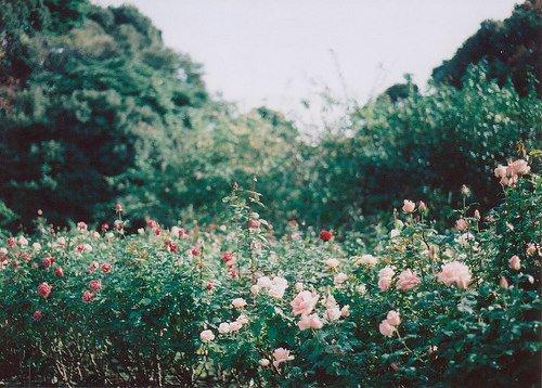 Quand je suis perdue je regarde le paysage et je le prend  en photo. Quand je suis triste , je l'admire juste .
