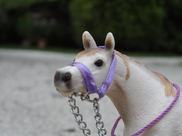 Première partis des chevaux