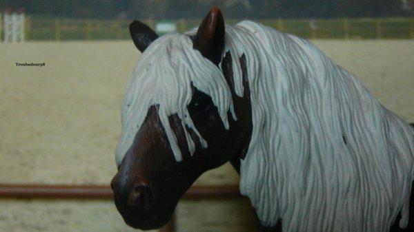 Quatrième partis des chevaux
