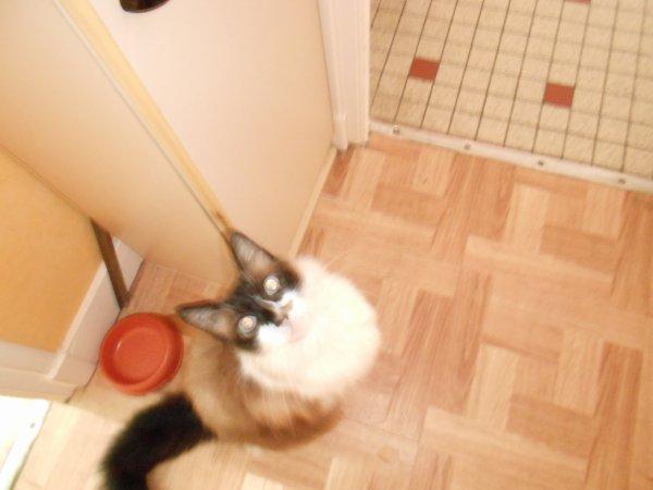 Nuage le chat mannequin !!!!!!!!!!