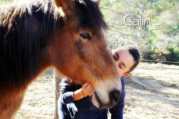 """""""Il n'y a pas de secret aussi intimes que ceux d'un cavalier et de son cheval."""""""