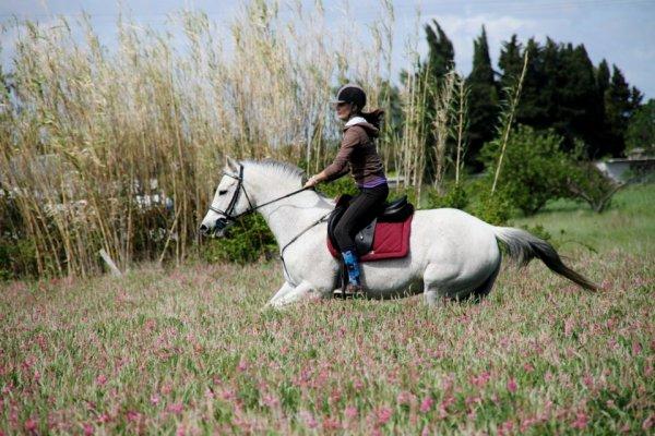 """Nous sommes toujours vivantes, même si il n'y a que des photos en ce moment. On enchaîne les bonnes séances, surtout en saut, elle est vraiment extra! Dimanche dernier, je crois, je l'ai monté en licol pour la première fois! Elle était vraiment bien, j'avais beaucoup d'arrêt (peut être plus qu'en mors?) mais la direction reste un peu a apprendre. En ce moment pas beaucoup envie de monter, le temps me déprime et ça doit pas être cool pour les chevaux non plus, pluie-vent/soleil! Samedi j'ai profité qu'elle soit excitée pour faire une séance à pied (l'envie de faire cours n'était pas la) Et bin j'ai eu raison! Je l'ai longé, elle était pas mal. Puis après pour la première fois sans friandise, elle m'a suivi sans pression sur la longe au trot et au pas et elle allongeait quand j'accélérais et elle pilait en même temps que moi! Elle était super réactive! Surtout pour la jambette et très appliquée! Ce que j'ai """"travaillé"""" c'est, trot allongement arrêt et demande de jambette en changeant de jambe rapidement, extra et sans friandise pour une première ! Et le dimanche une grande balade avec une amie et son cheval qu'elle vient d'avoir (voir photo). Elle était top pour une première balade ou on a galoper avec un copain, même si les freins c'était le copain (huum humm...), quand elle le dépassait j'arrivais quand même à la reprendre. Bref, un excellent week end pour nous deux! Elle me donne tant en ce moment, j'ai appris à lui accorder ma confiance et elle m'en donne encore plus en retour, c'est fou comme je l'aime ! ♥"""