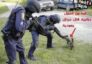 Le chat est d'origine algérienne a tué un rat juifs.