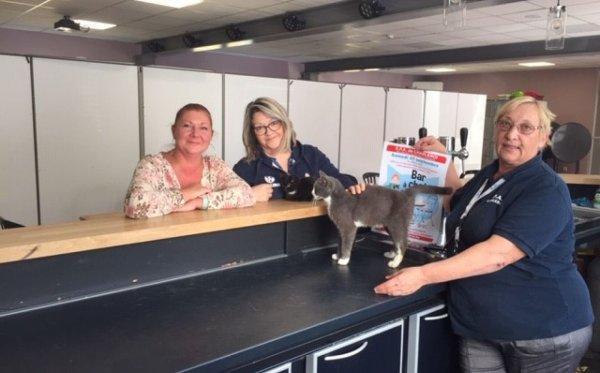 Un bar à chats éphémère, ce 21 septembre à Charleroi