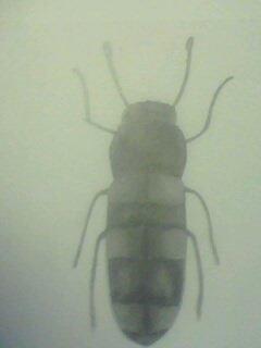 """""""insecte"""" pour une expo =3"""