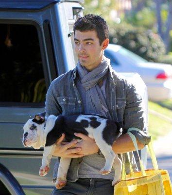 Hello, Joe a été vu (27/11/10) en train de promener Winston dans les rues de Los Angeles, il semblerait qu'il ne soit pas encore très à l'aise avec son nouvel ami puisqu'il est sans arrêt en train de surveiller le bout de la laisse :) Sa viendra :p. Ne vont-il pas bien ensemble?     Puis le 28/11/10 Joe portant Winston qui semblerai être parreseux xP