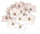 Photo de Peace-Love-Flower