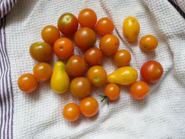 Mes premiers légumes de mon partenaire Baumaux