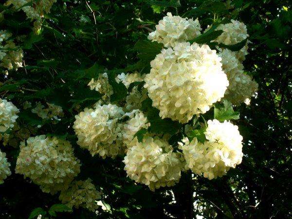 Fleurs Immortelles (part.2)