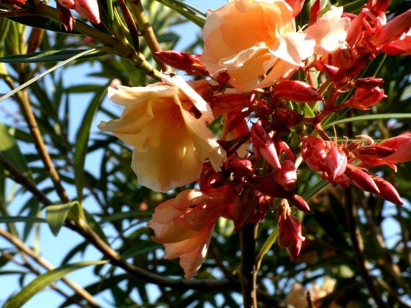 Fleurs Immortelles (part.3)