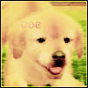 Photo de Nintendogs-3DS-Cats