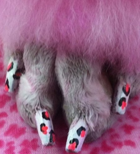 nail art canin!