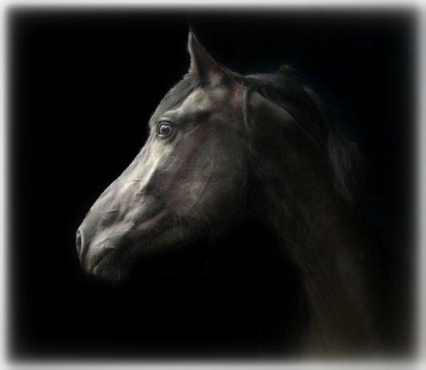 Spirit : le retour