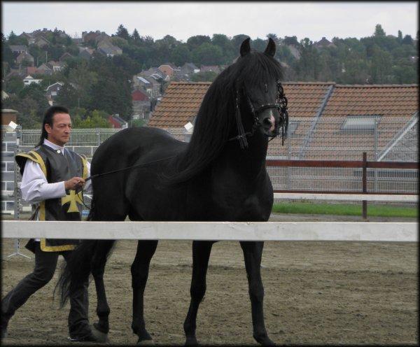 Falisolle, le 15 août 2011, qq photos