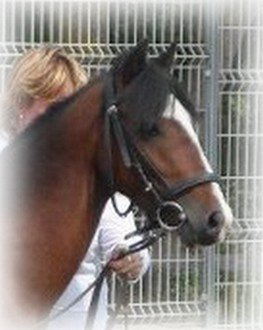 Falisolle, le 15/08/2012