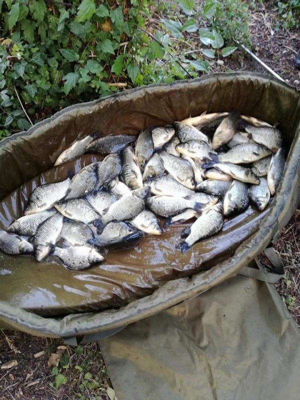 55 Fish au coup