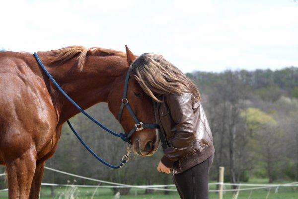 Regarder un cavalier sans son cheval , il lui manque la moitié de son sang .