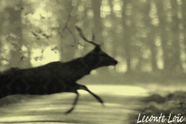 Lyons la forêt: débucher 2