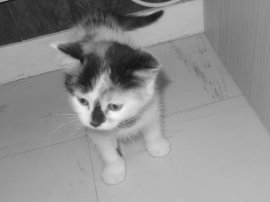 Mon Chat D'amour ♥