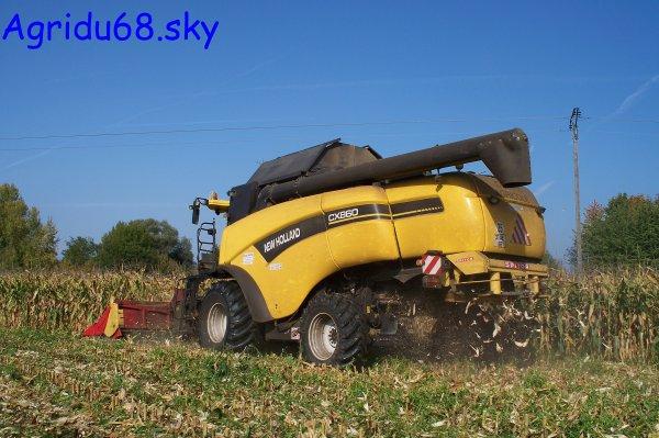NH CX860+ bec à maïs CAPELLO QUASAR R8 de 8rangs (ETA Claude GRETTER) (à la ferme voisine) (09.10.10)