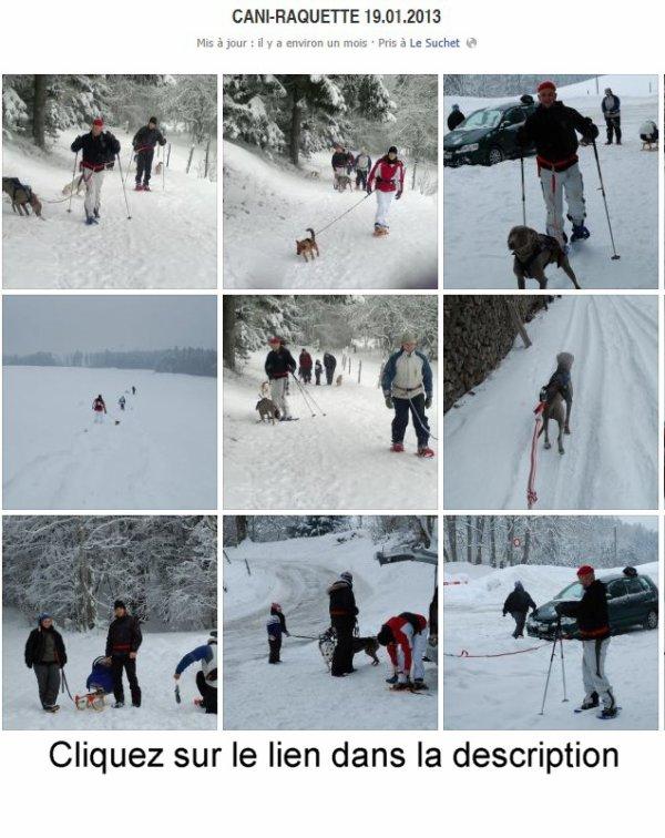 Cani-Raquette 19.01.2013.