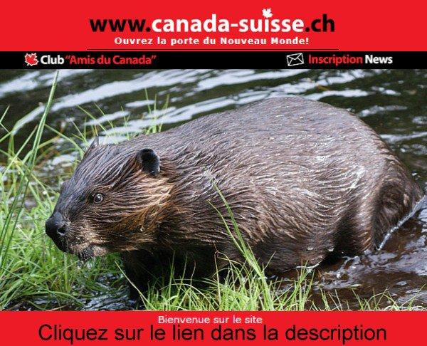 Suisse-Canada.