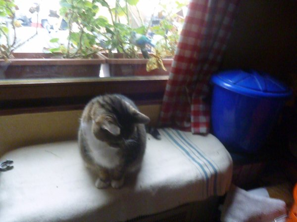 déjà 32 semaine que tu es partie mémère - Hommage as mémère une de mais chatte décèd