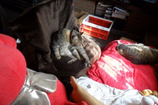 Hommage as mémère ma chatte déjà 35 semaine demain que tu es partie mémère - Hommage as mémère une de mais chatte décède décédée