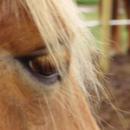 Photo de romance-equestre