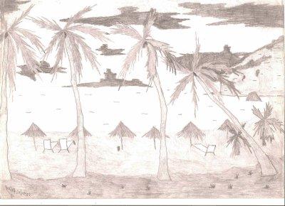 Une plage avec ces cocotiers (Guadeloupe)