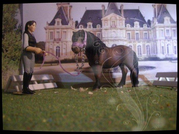 Mes chevaux 1