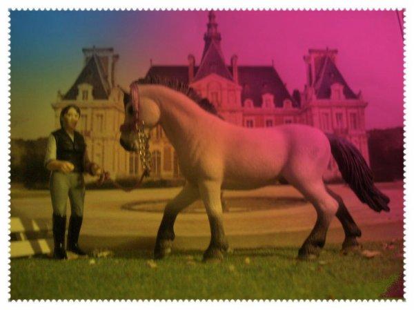 Mes chevaux 2