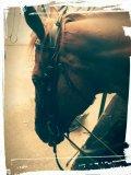 Photo de enjoyridinghorse