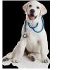 Demain j'attaque mon premier jour de remplacement comme assistante vétérinaire.