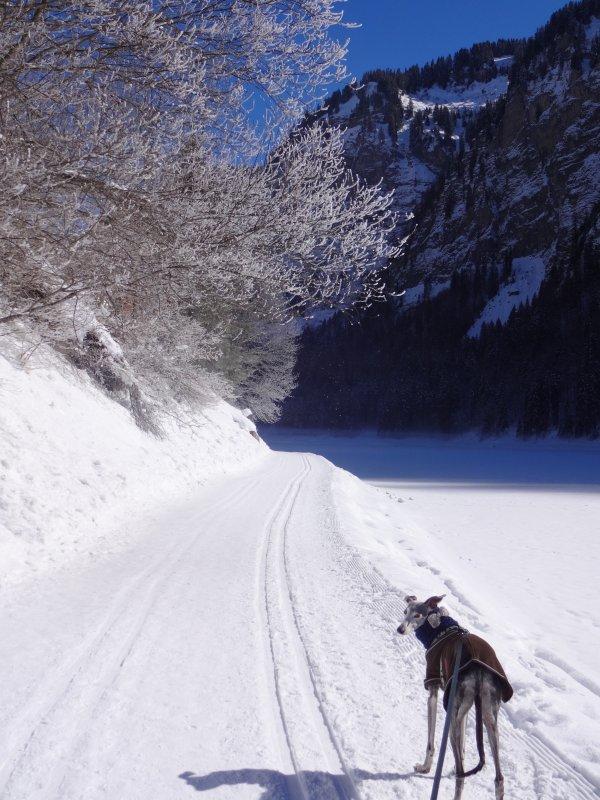 Pendant nos vacances autour du Lac Leman